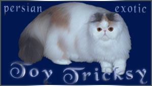 http://www.toytricksy.com/ourbanner/toy1.jpg