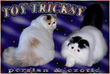 http://www.toytricksy.com/ourbanner/toy9.jpg